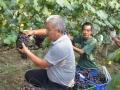 葡萄市场:价格战来得太早了