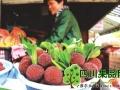 浙江温州瑞安外地杨梅每公斤售价160元(图)