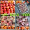 山东苹果价格苹果供应苹果主产地
