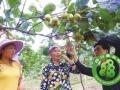富硒SOD猕猴桃在广元市成功面世