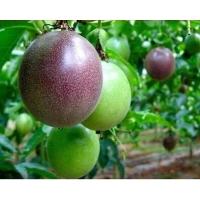 百香果种子西番莲种子鸡蛋果种苗爬藤水果籽多年生水果种子