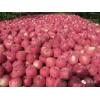 2015年陕西苹果批发—陕西红富士苹果价格—陕西淳化苹果基地