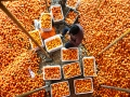 山东省沂源县5万余亩柿子红了