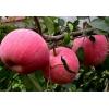 卖苹果了15265163845