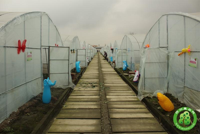 景辉草莓园基地道路