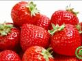 简阳草池邀你一起来采草莓