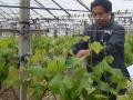 农业专家现场讲解葡萄发芽后的管理技术 (418播放)