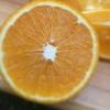 出售金堂脐橙