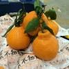 农家自产自销挂树新鲜水果