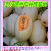 供应东方密一号甜瓜