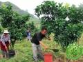 果树一整年到底该怎么施肥?