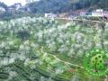 千年苦寻桃花源 就在江安南屏山