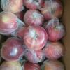 红富士苹果供应