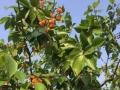 告诉你南充哪里可以摘樱桃?