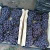 大量出售辽宁北镇巨峰葡萄