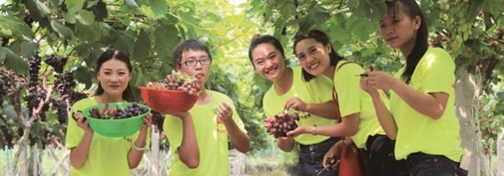 小葡萄做出大产业
