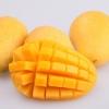 超好吃超级甜的攀枝花凯特大芒果