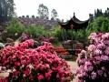 四川花卉生态旅游节3月都江堰开幕