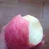 山东红富士苹果产地价格信息