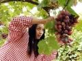 小葡萄串起大产业