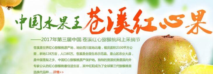 2017苍溪红心猕猴桃网上采摘节
