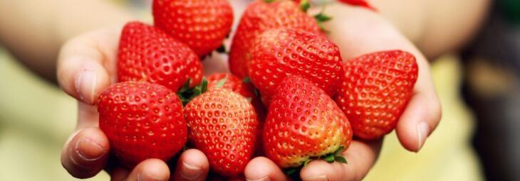 2018成都摘冬草莓攻略