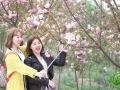 岳池县第四届樱花节开幕