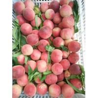 果园直供毛桃 桃子 桃上市