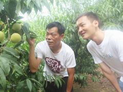 """""""第一书记""""牵手电商 10万斤苹果桃不愁卖了"""